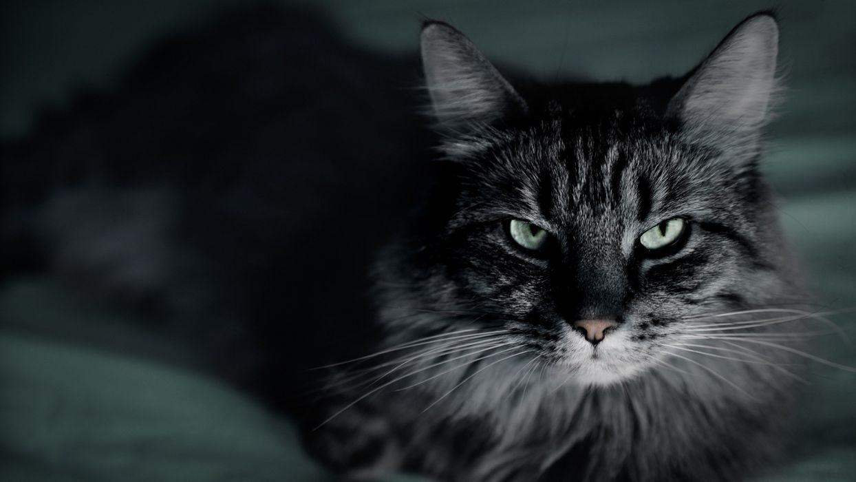 eyes cats pets ears wallpaper