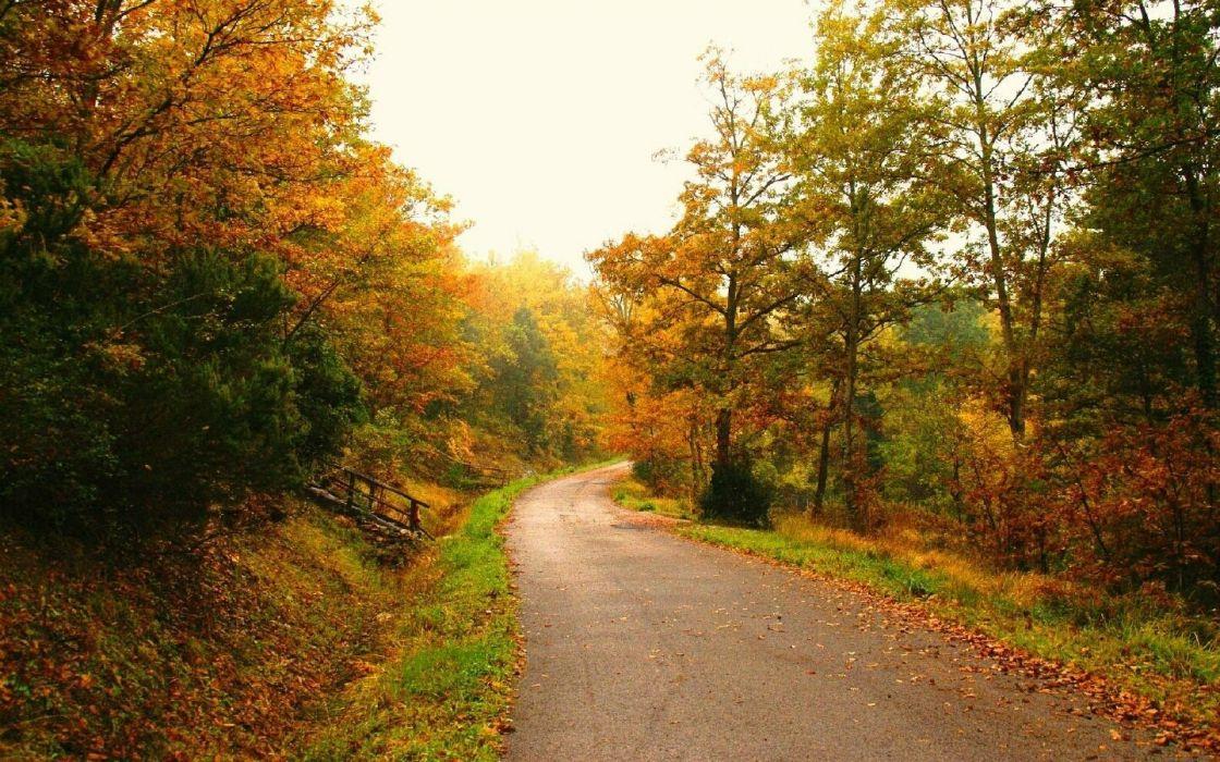 trees autumn (season) leaves roads fallen leaves wallpaper