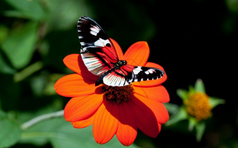 nature red insects butterflies wallpaper