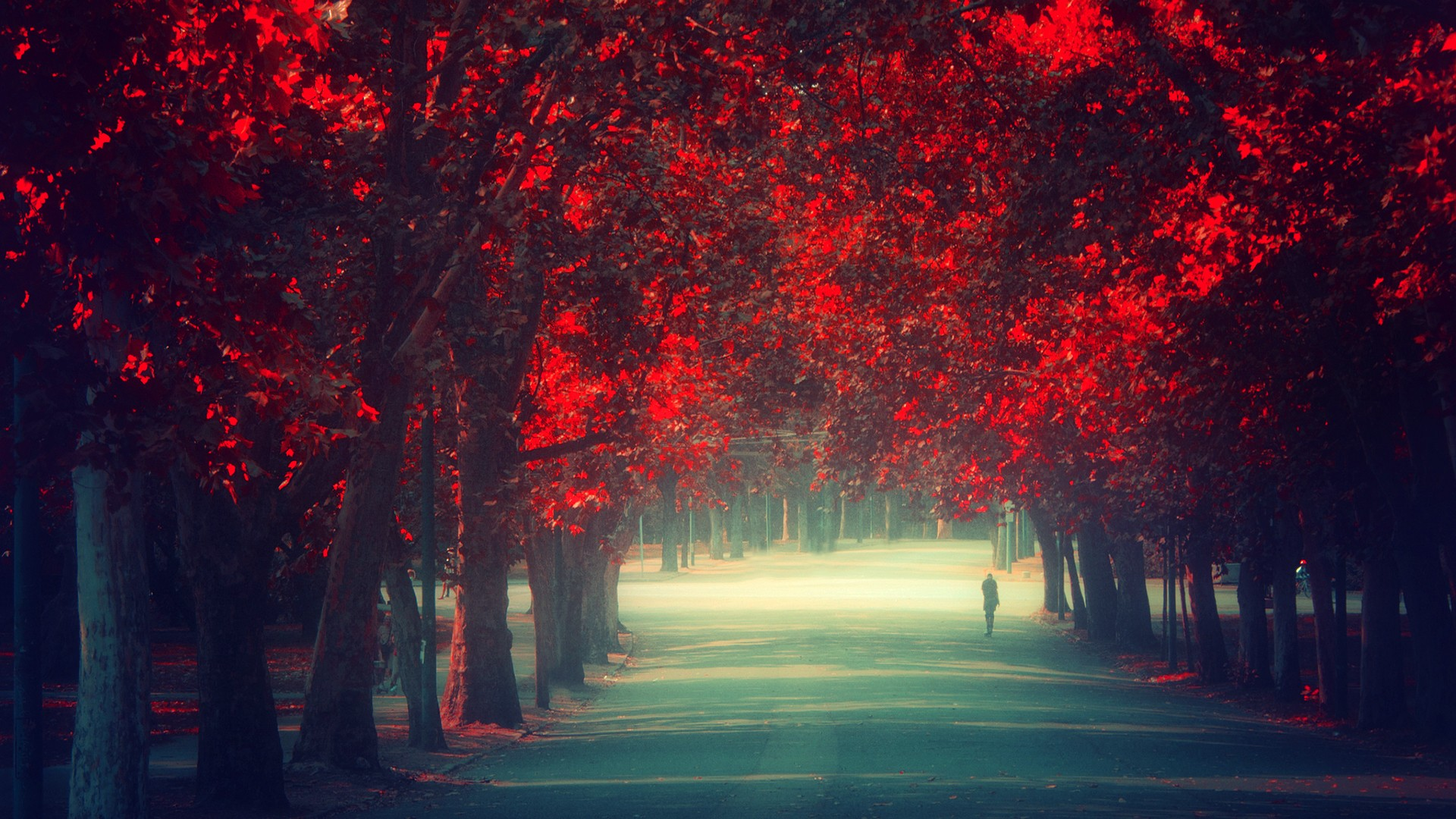 Trees Autumn Season Red Leaves Remembrance Wallpaper