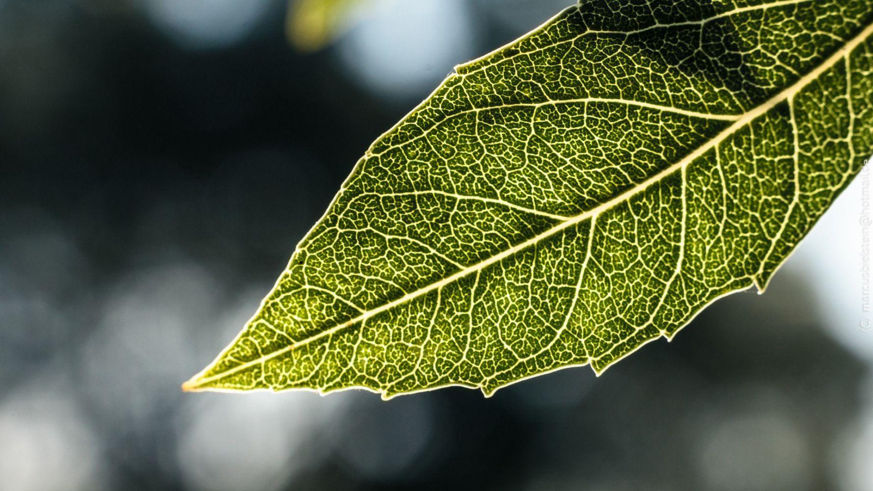 последняя макро фото листьев получения стабильных урожаев