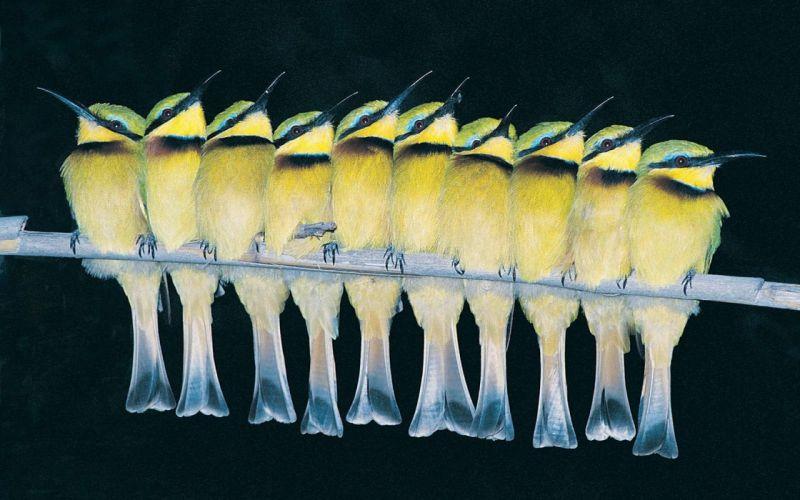 birds Bee Eaters wallpaper