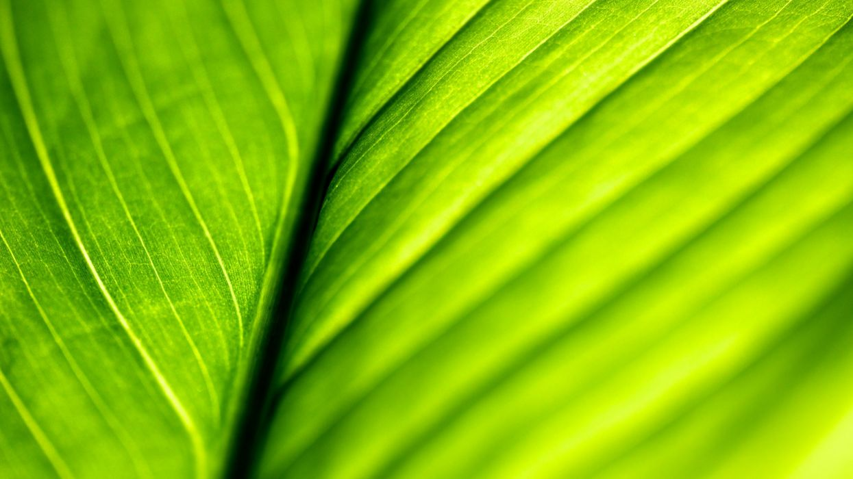 green close-up nature leaves macro structure wallpaper