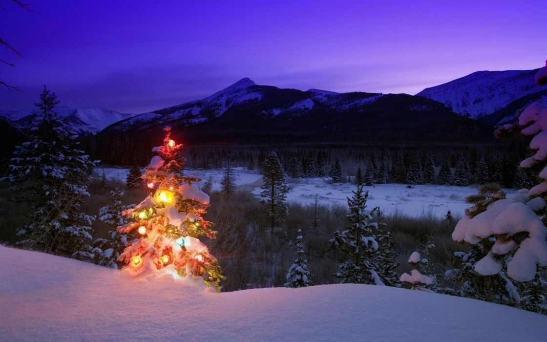 Christmas trees snow landscapes wallpaper