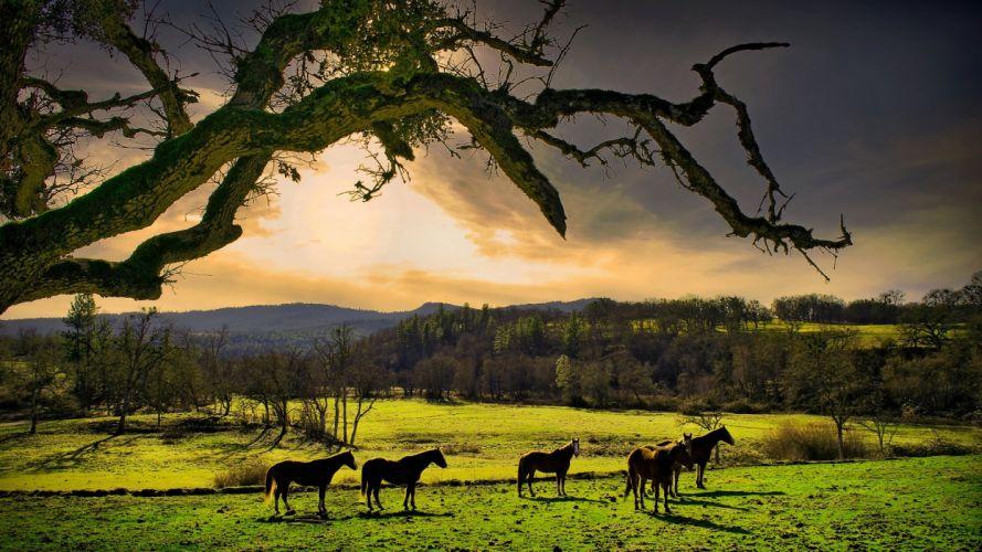 nature meadow horses Oregon wallpaper