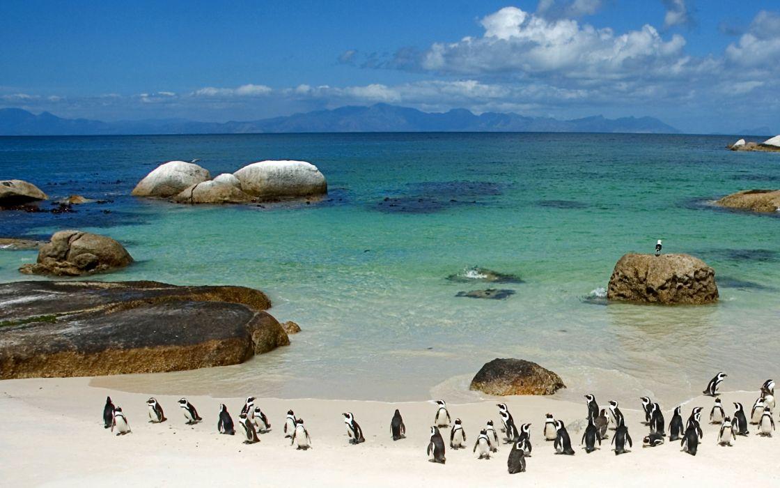 birds rocks penguins sea wallpaper