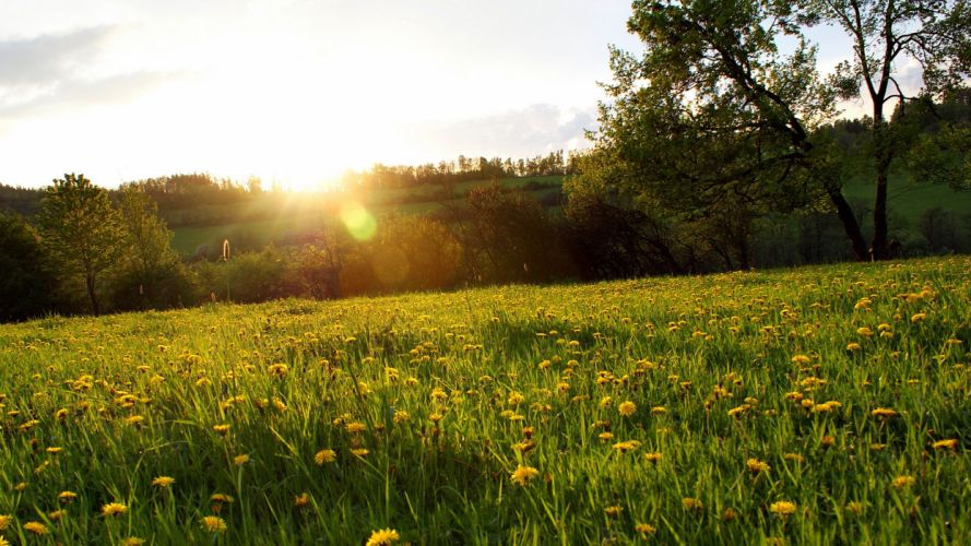 landscapes nature fields land yellow flowers wallpaper