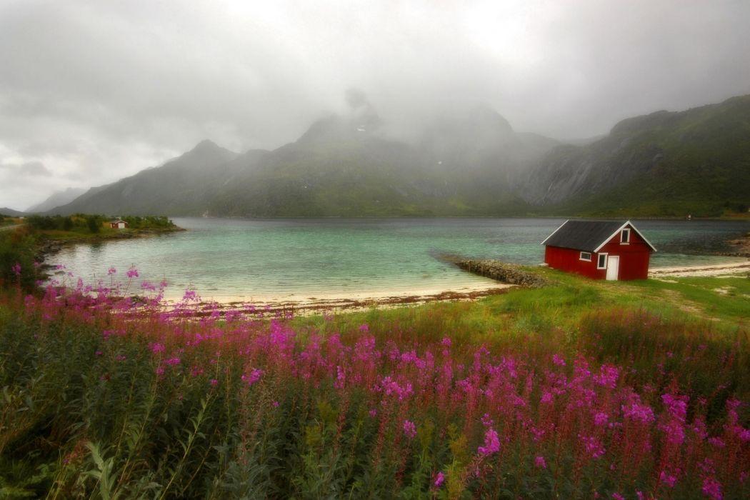 landscapes Norway Lofoten wildflowers wallpaper