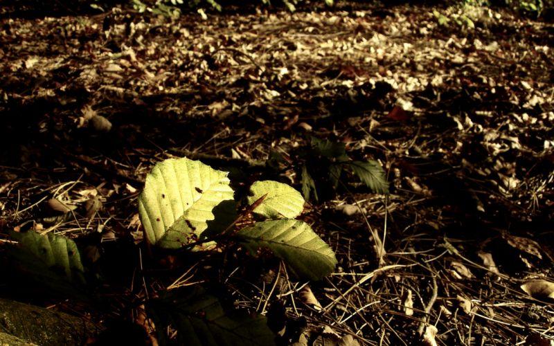 autumn (season) forest leaves fallen leaves wallpaper