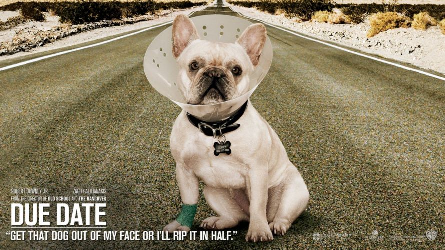 movies dogs Due Date wallpaper