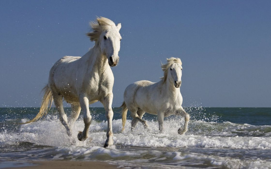 horses running mammals wallpaper
