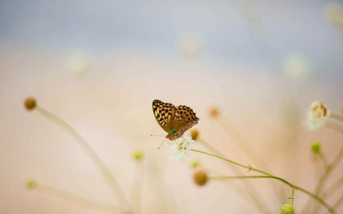 grass macro butterflies wallpaper