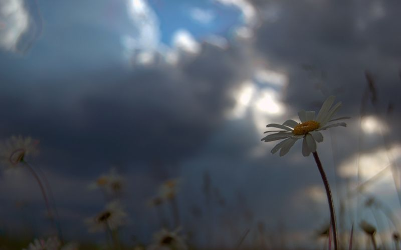 Sun flowers skyscapes wallpaper
