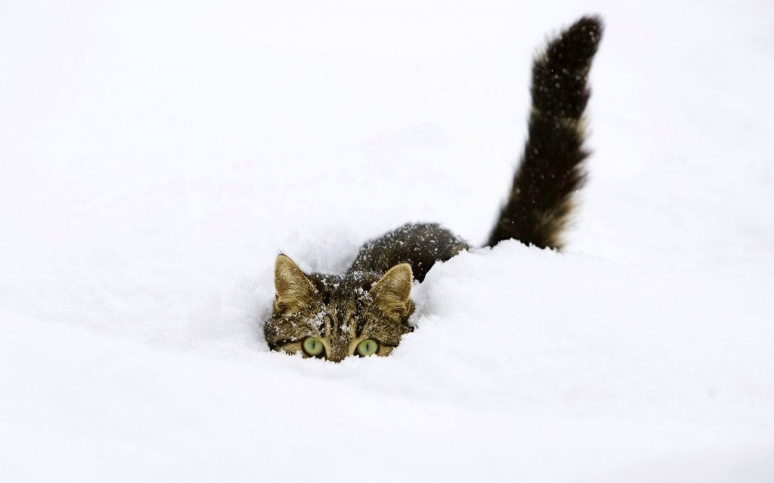 snow cats kittens funny animals fondo upscaled wallpaper