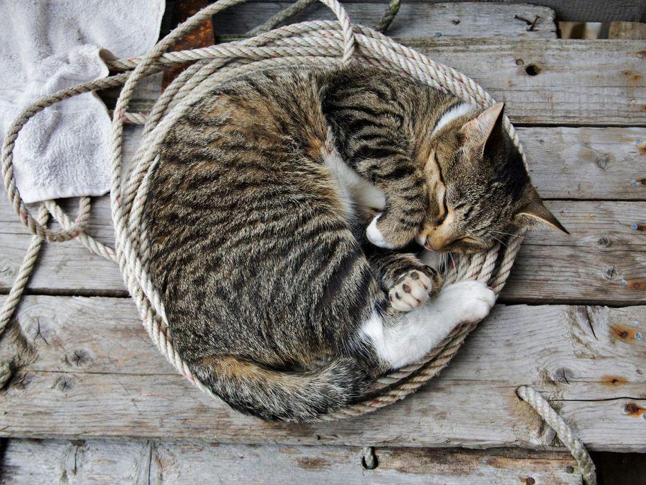 cats sleeping ropes wallpaper
