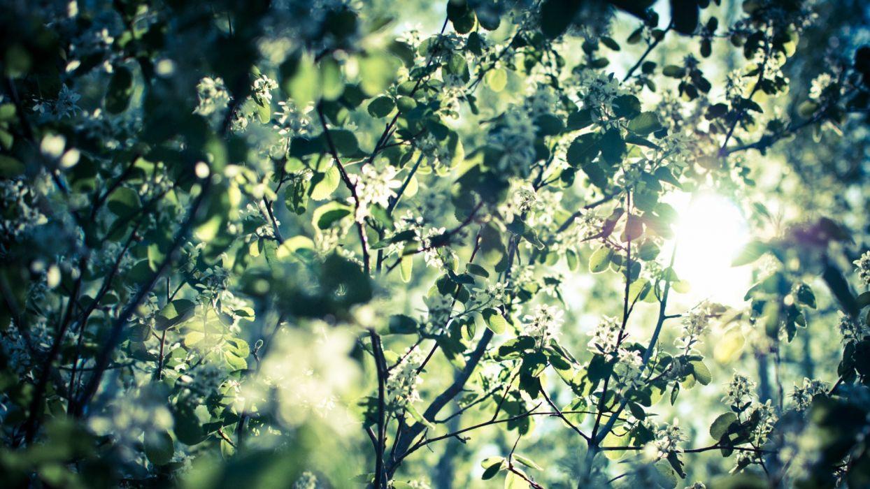 nature leaves bokeh sunlight white flowers wallpaper