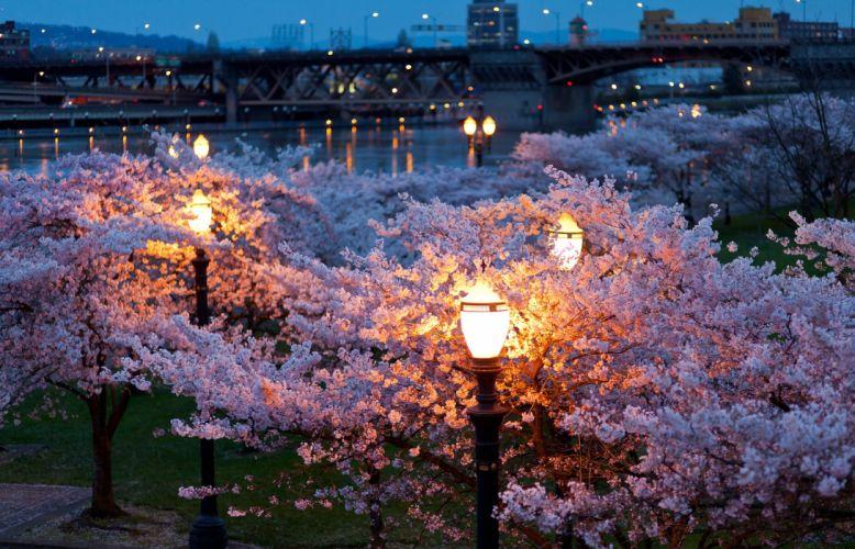 trees cityscapes night lights bridges spring (season) parks rivers wallpaper
