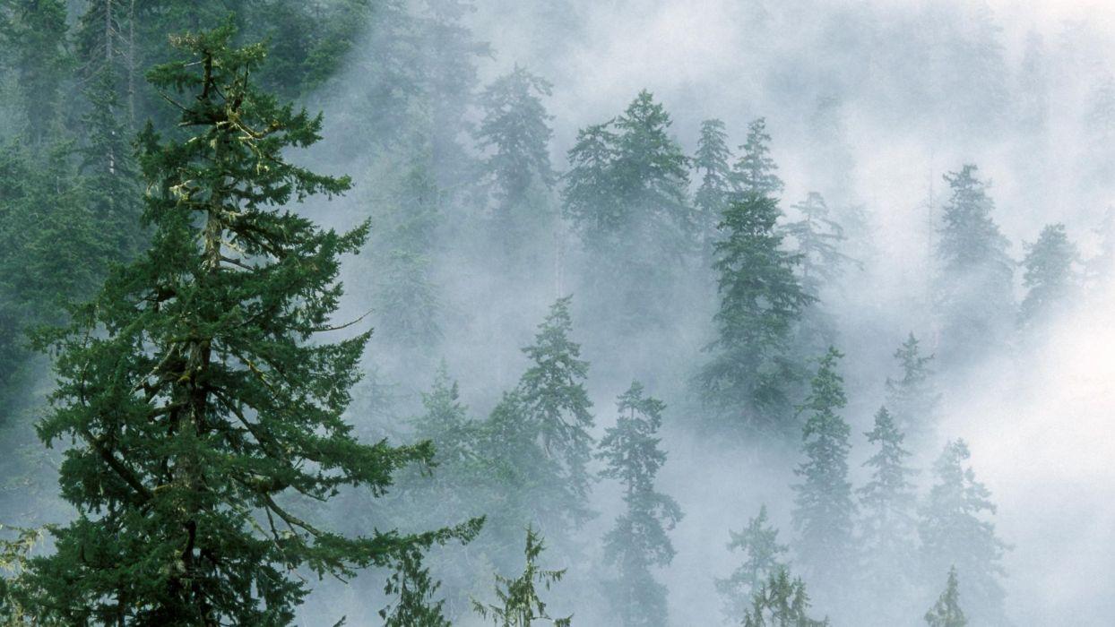 clouds landscapes forest National Park Washington wallpaper