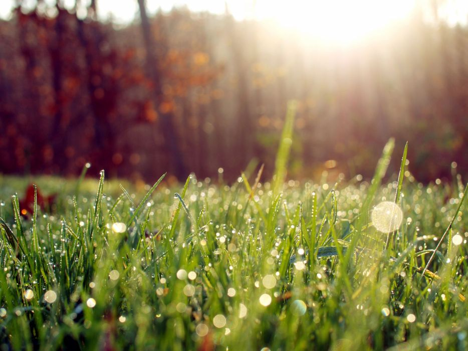 nature Sun grass lens flare wallpaper