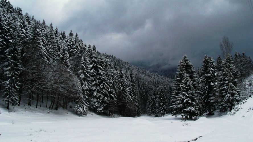 winter snow trees forest wallpaper