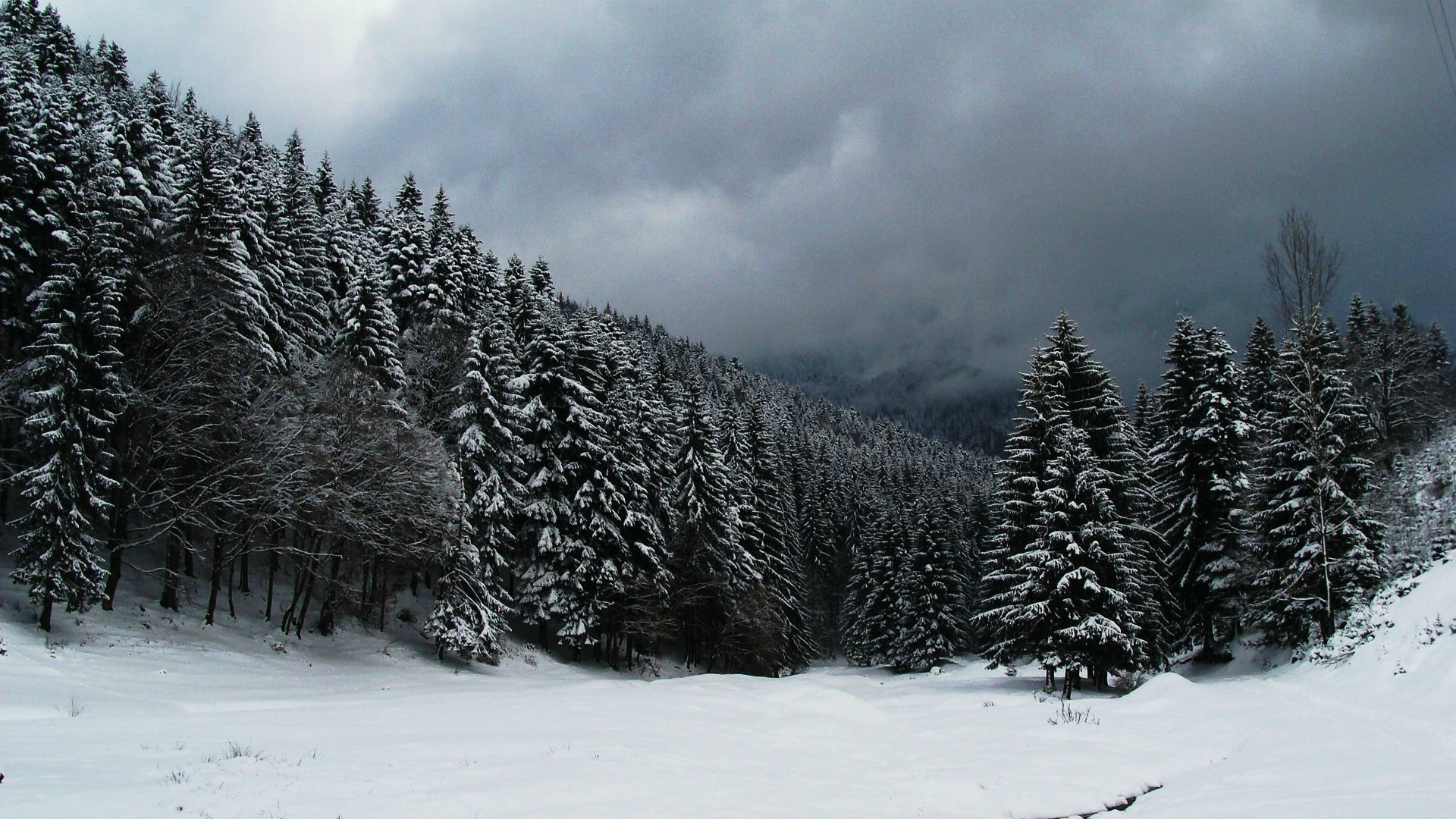 winter forest trees snow - photo #12