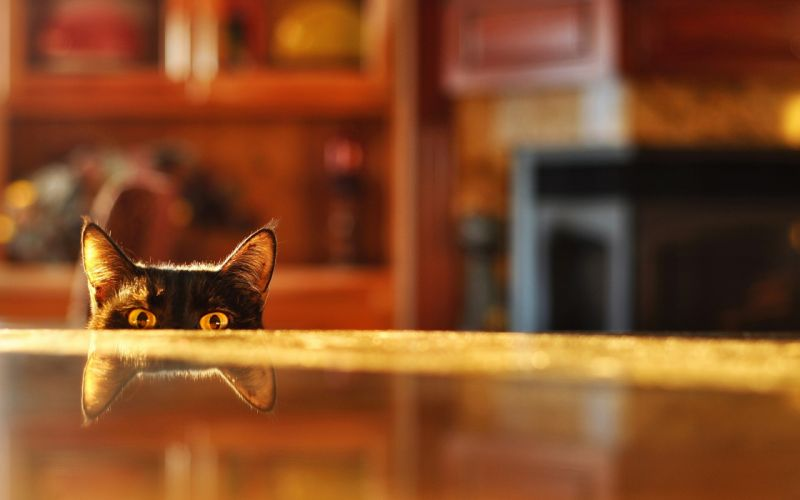 eyes cats depth of field reflections tabletop wallpaper