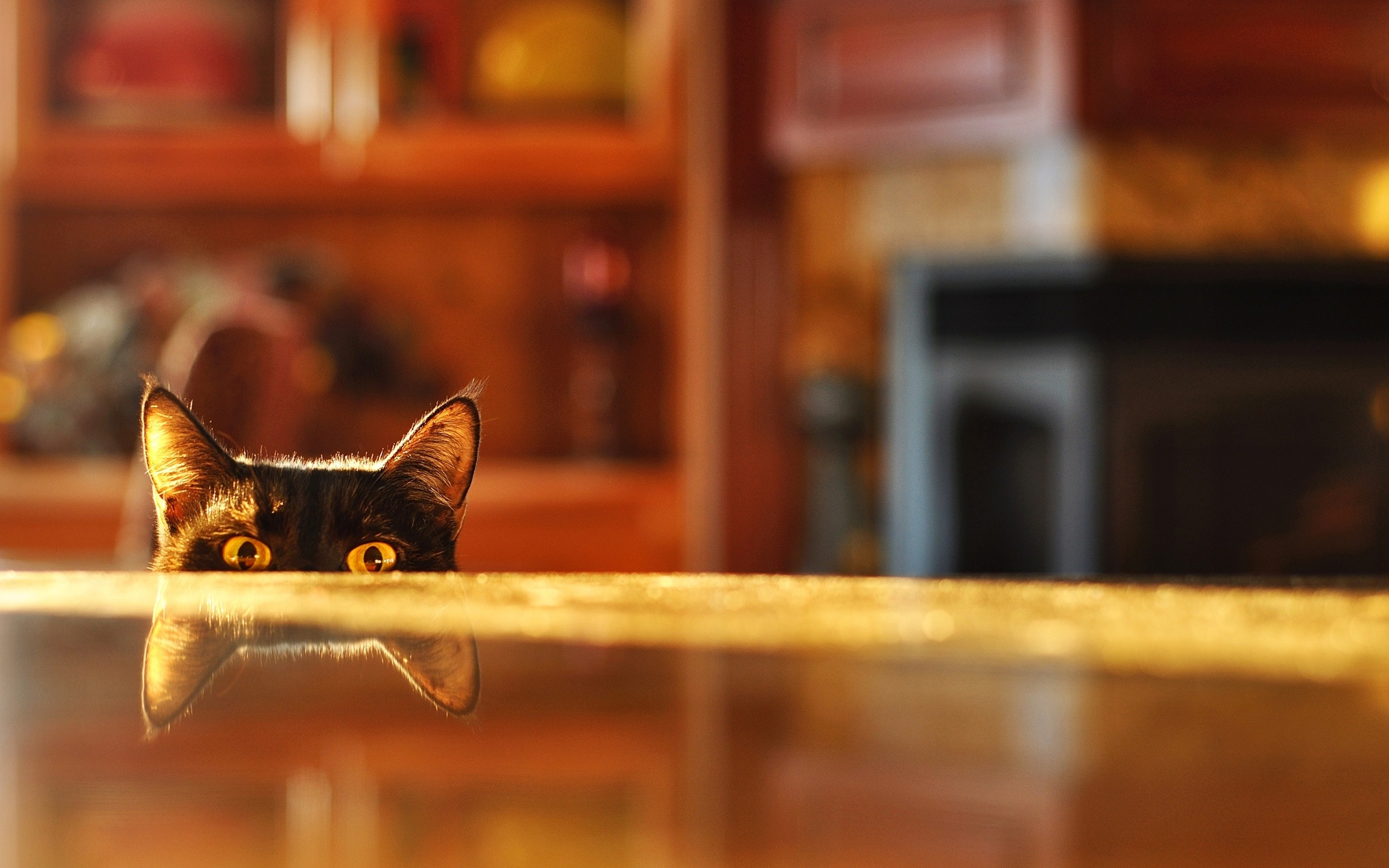 Eyes Cats Depth Of Field Reflections Tabletop Wallpaper 2560x1600 63392 Wallpaperup
