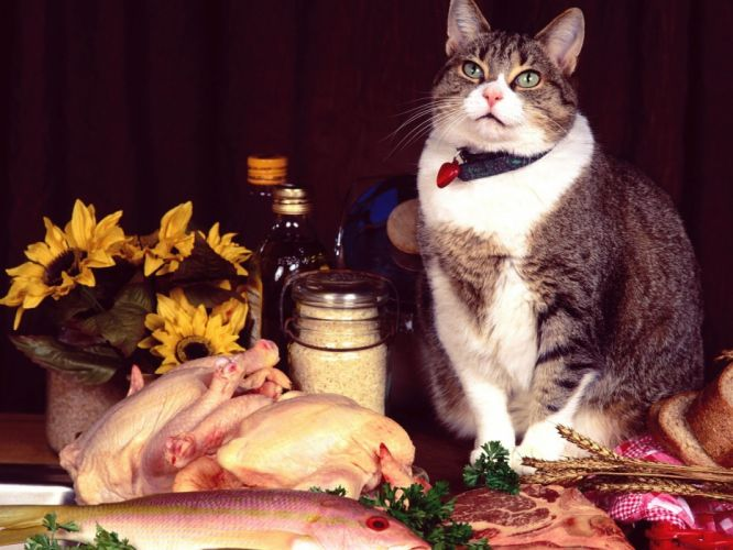cats food meat fish chickens beef wallpaper