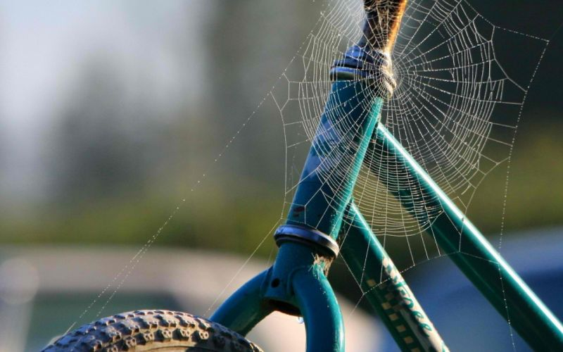 web spiders motorbikes wallpaper