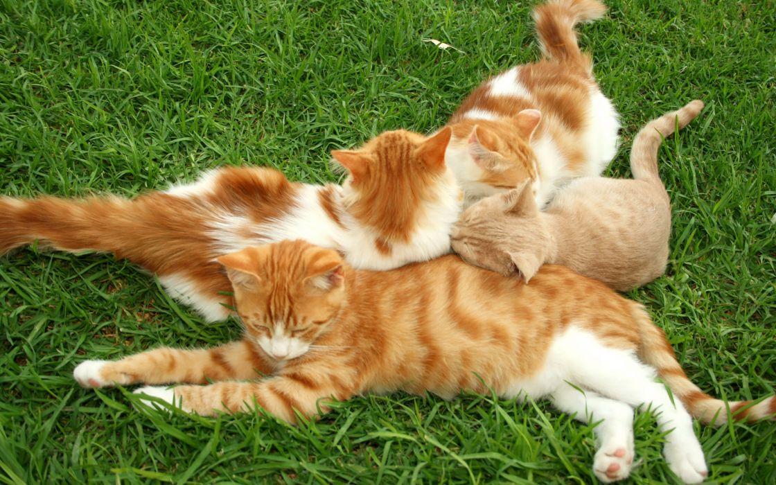 cats grass kittens wallpaper