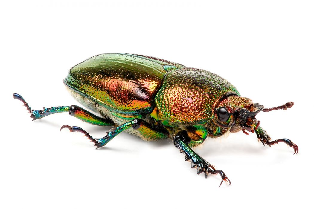 multicolor insects Bug metallic white background iridescence wallpaper