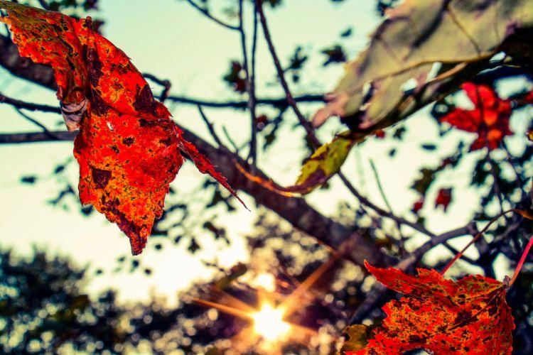 nature trees autumn (season) wallpaper