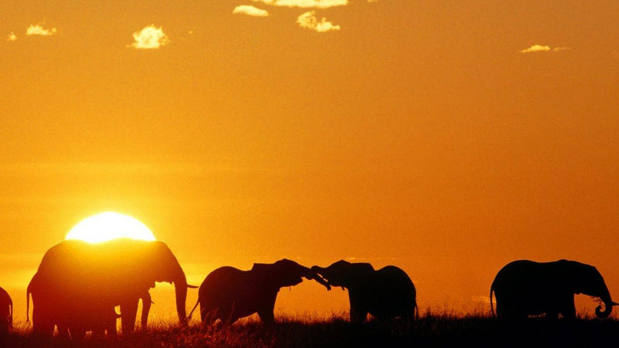 mara elephants African Africa Kenya wallpaper