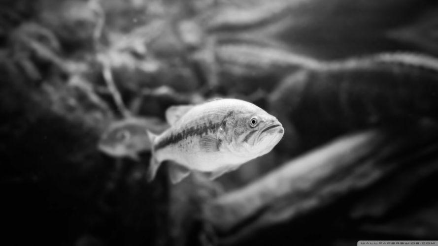 black and white animals fish sealife wallpaper