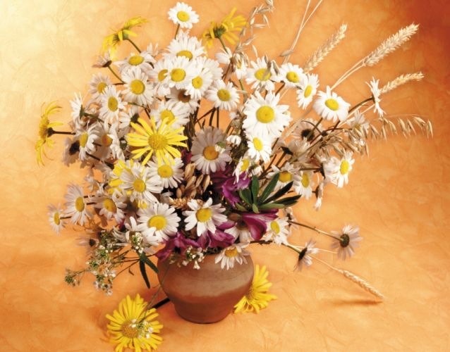 Bouquets Camomiles Flowers still life wallpaper