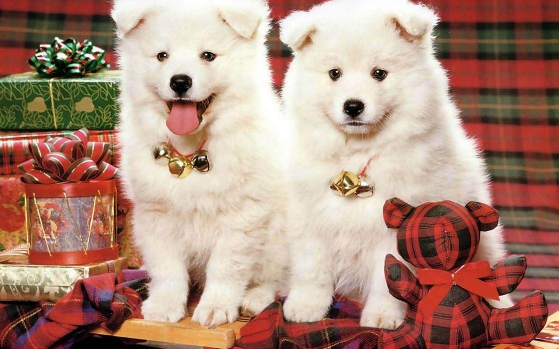 christmas new year wallpaper