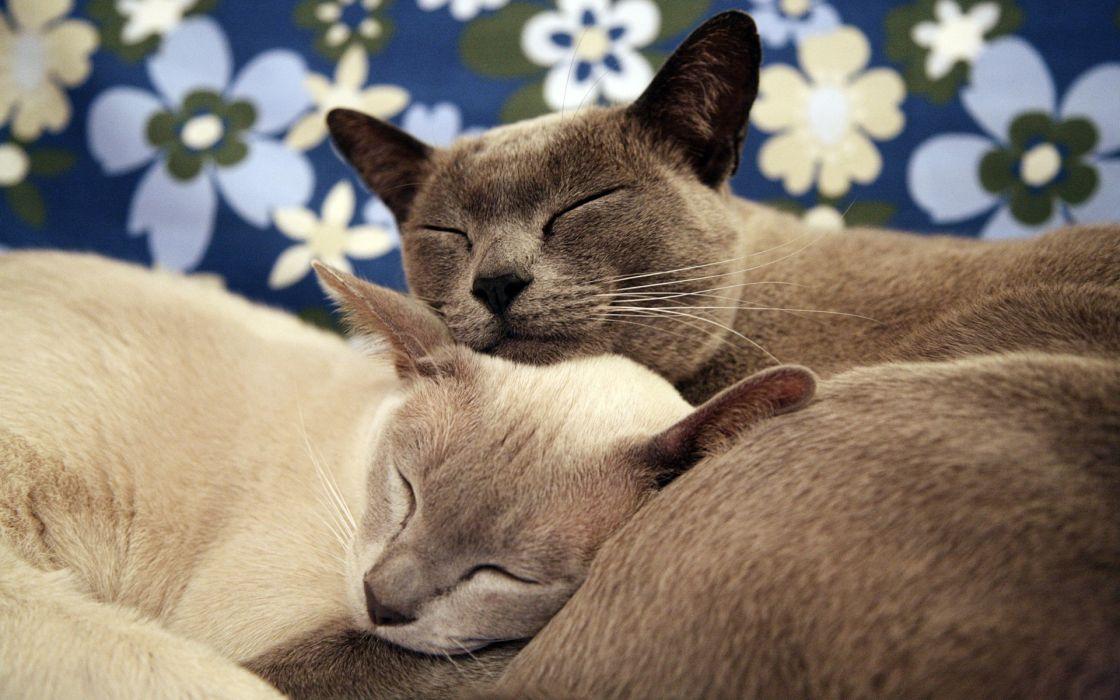 Cat Sleep wallpaper