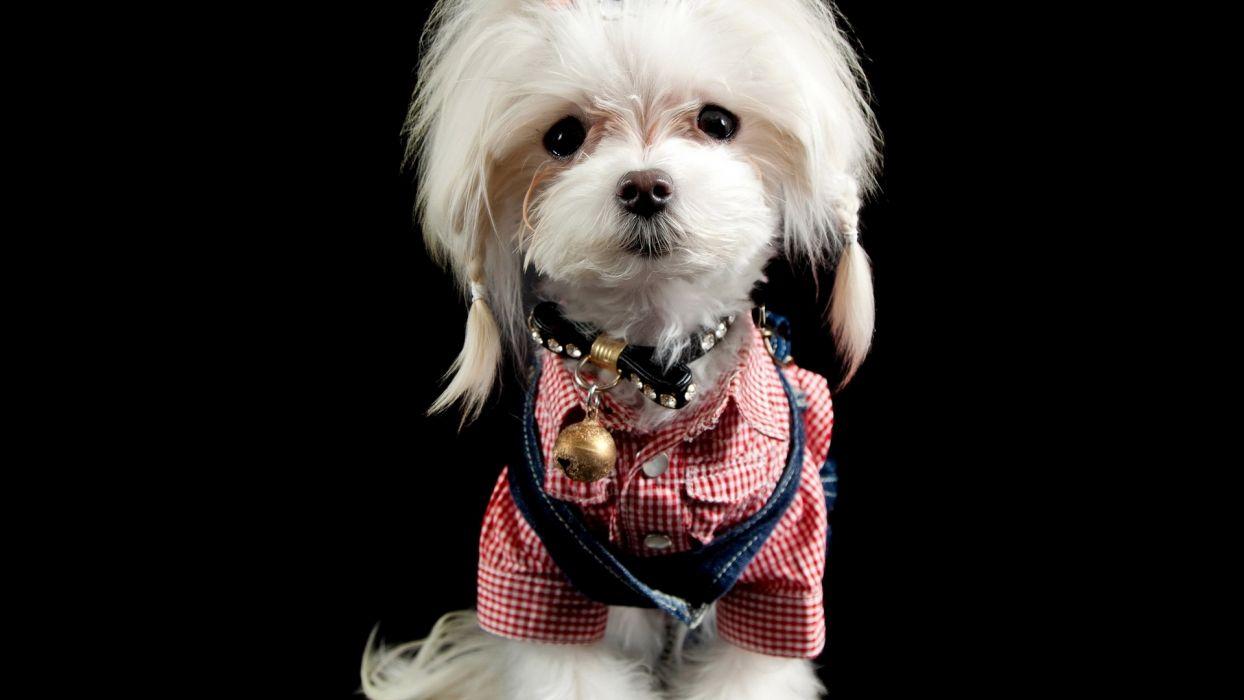 Dogs Glance Formal shirt Animals wallpaper
