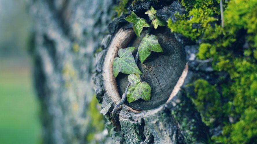 Leaves Macro Wood wallpaper