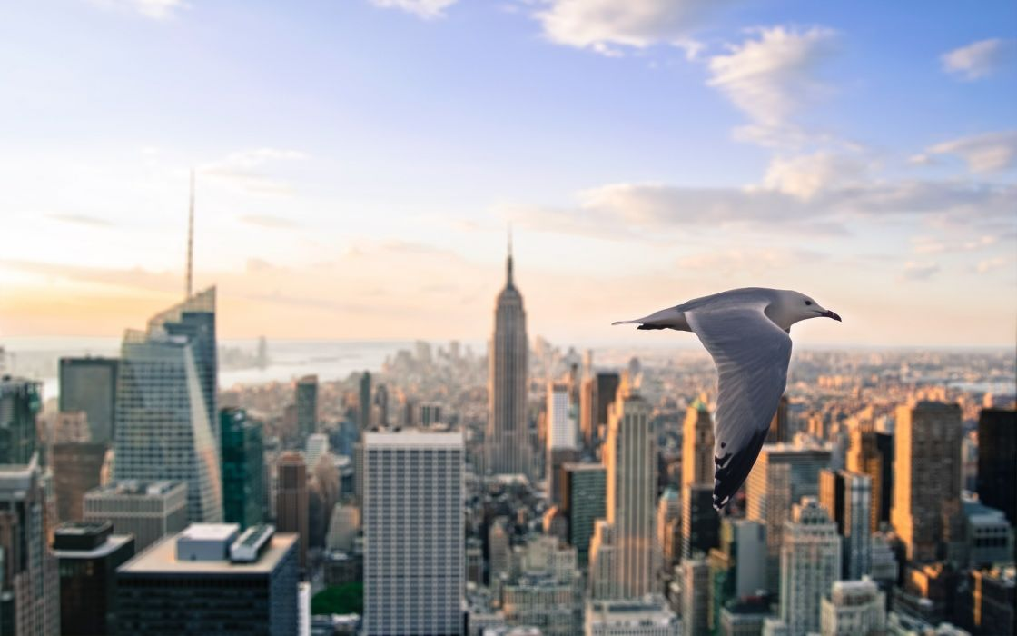 New York City birds wallpaper