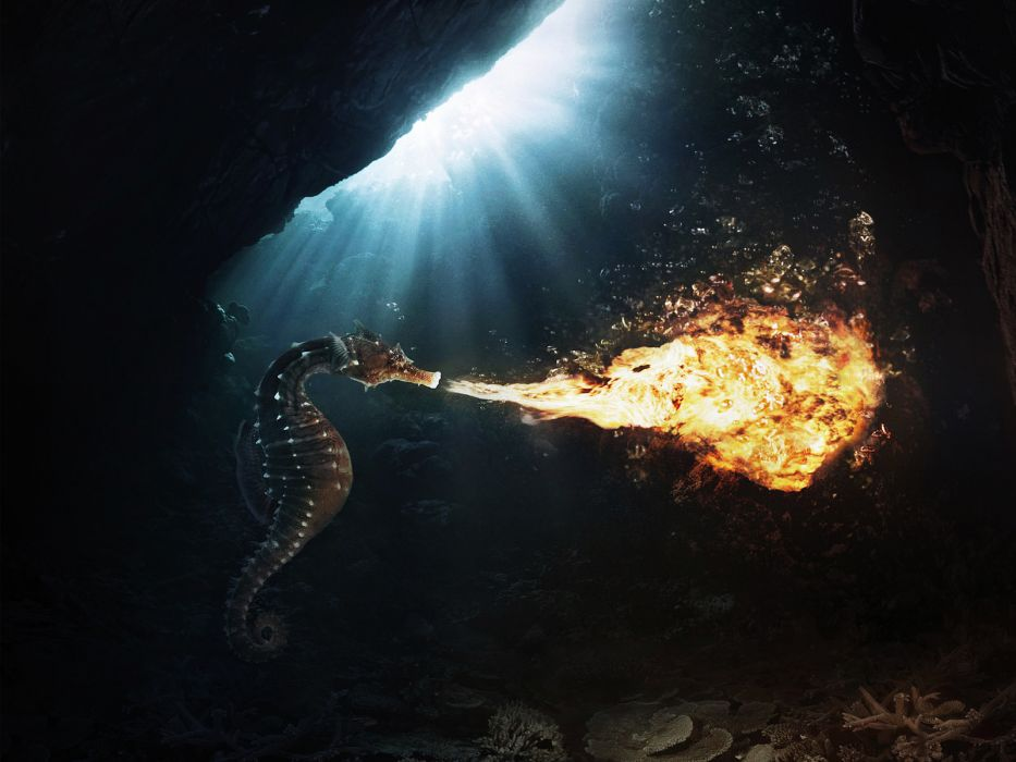Seahorse Fire Flame Underwater Sunlight wallpaper