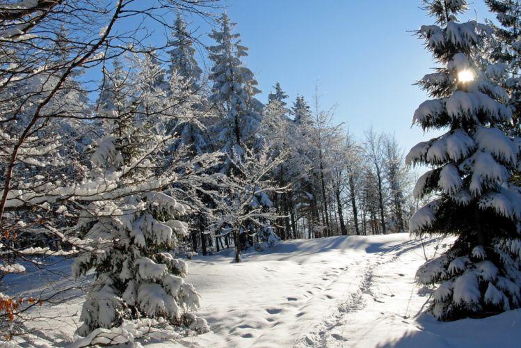 Seasons Winter Snow Trees Fir Nature wallpaper