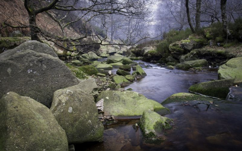 stones rocks rivers trees forest wallpaper