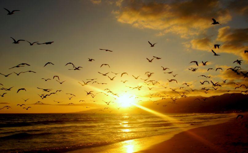 Sunrises sunsets Coast Birds USA Malibu California Rays sea ocean wallpaper