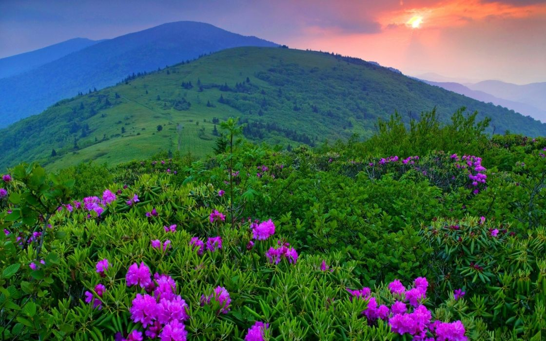 sunset mountains plants flowers wallpaper
