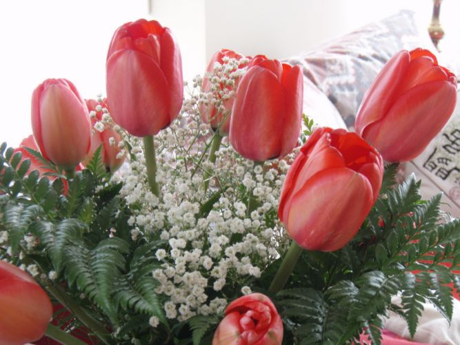 Tulips Bouquets Red Flowers wallpaper
