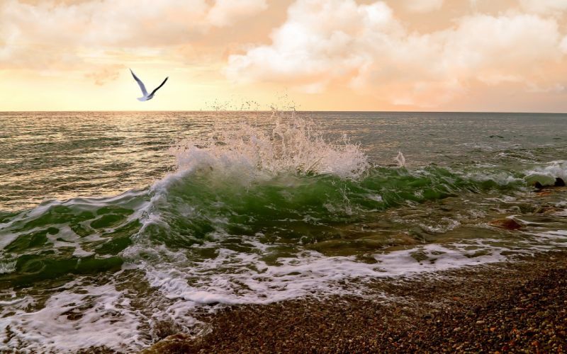 waves sea sunset birds ocean wallpaper