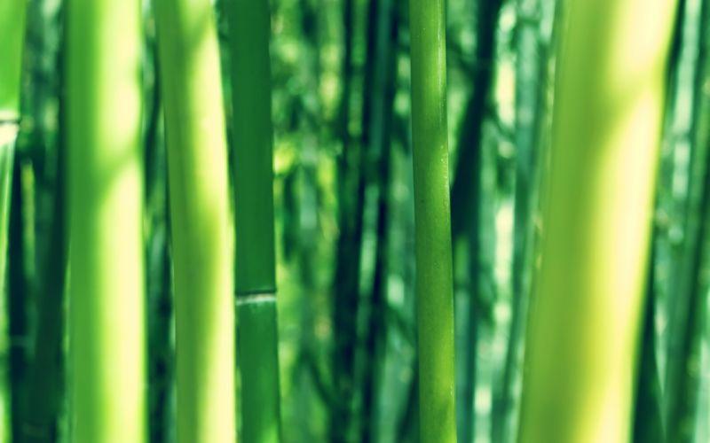 nature bamboo depth of field wallpaper