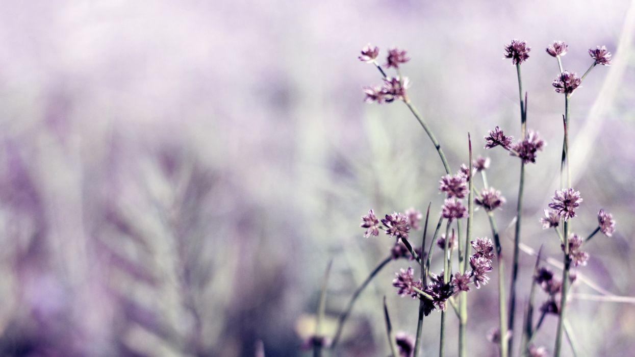 nature flowers macro depth of field wallpaper