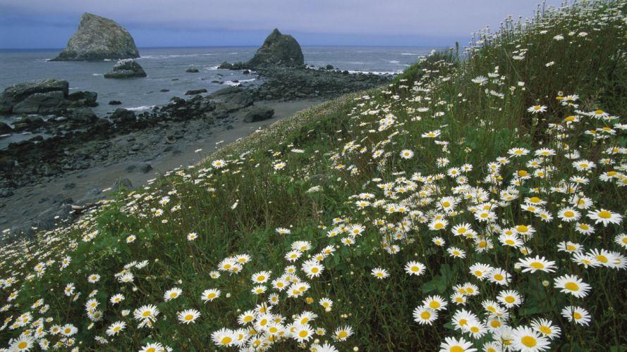 California National Park sea wallpaper